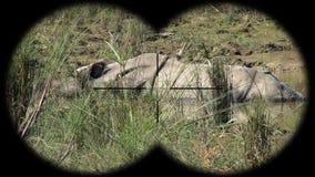 Indian one horned rhinoceros rhinoceros unicornis seen through binoculars. Watching animals at wildlife safari. Shot with a Sony a6300 fps 29,97 4k stock footage