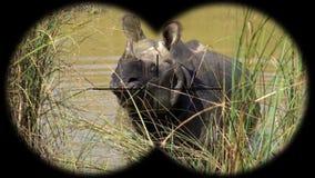 Indian one horned rhinoceros rhinoceros unicornis seen through binoculars. Watching animals at wildlife safari. Shot with a Sony a6300 fps 29,97 4k stock video