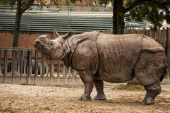 Indian one-horned rhinoceros Stock Photo