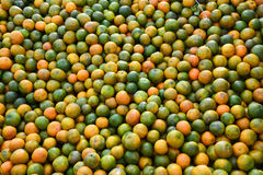 Indian Oranges Stock Images