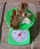 Indian oyster mushroom on weighting scale Stock Images