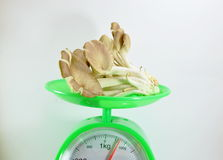 Indian oyster mushroom on weighting scale Stock Image