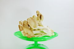 Indian oyster mushroom on weighting scale Stock Photography