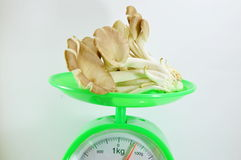 Indian oyster mushroom on weighting scale Royalty Free Stock Photography