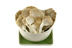 Indian Oyster (Phoenix) Mushroom Royalty Free Stock Image
