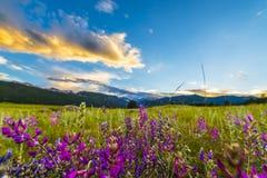 Indian Paintbrush flowers Colorado Landscape Stock Photo