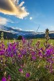 Indian Paintbrush flowers Colorado Landscape Royalty Free Stock Image