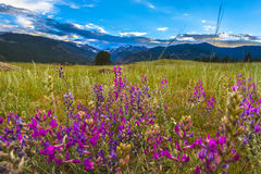 Indian Paintbrush flowers Colorado Landscape Stock Photography