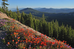Indian Paintbrush and Mountains Stock Photos