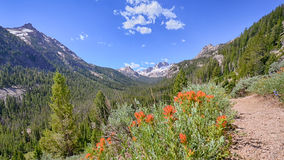 Indian Paintbrush, Sawtooth National Recreation Area, ID Stock Image