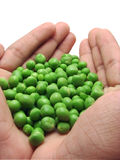 Indian Peas in Hands Royalty Free Stock Photography