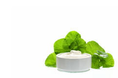 Indian pennywort anti-aging skin care product. Royalty Free Stock Photography