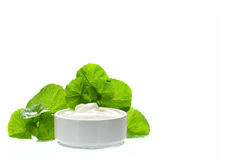 Indian pennywort anti-aging skin care product. Royalty Free Stock Image