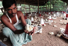 INDIAN POULTRY FARM Royalty Free Stock Photography