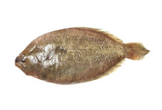 Indian Psetta maxima (Turbot Fish) isolated on white background Stock Photos