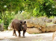 Indian Rhinoceros Stock Photo
