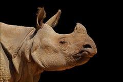 Indian rhinoceros portrait on black stock photos