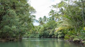 Indian River Dominica touristic boat tour. One of the views you get to enjoy when you take the touristic boat tour that leads you over the Indian river in Royalty Free Stock Photos