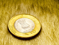 Indian rupee lying on a fur carpet Royalty Free Stock Image