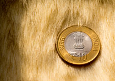 Indian rupee lying on a fur carpet. Indian rupee on a fur carpet, could be used to signify the return to opulence or comfort for the rupee following the Stock Photos
