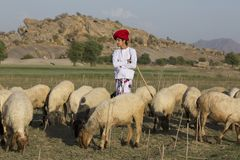 Rural Herding. Indian Rural Boy in traditional casual stock photos