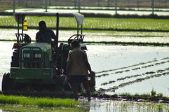 Indian rural farmer crop farming in the field with tractor. Indian farmer doing rice crop farming in the field with contractor in thee morning royalty free stock image