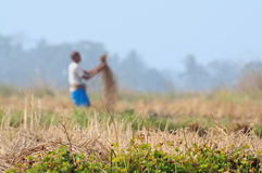 Indian rural man working in the field Royalty Free Stock Images