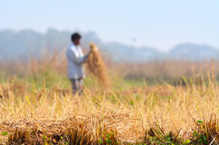 Indian rural man working in the field Royalty Free Stock Photos