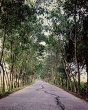 Indian rural roads. A landscape photograph of a typical rural street in West Bengal,India.The photo was taken in the month of april Royalty Free Stock Photography