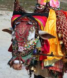 Indian sacred cow on the beach, GOA Royalty Free Stock Photography