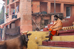 Indian Sadhu with the sacred cow on the steps of the Kshameshwar Ghat in Varanasi Royalty Free Stock Photo