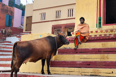Indian Sadhu with the sacred cow on the steps of the Kshameshwar Ghat in Varanasi Royalty Free Stock Photos