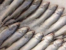 Indian salmon Royalty Free Stock Image
