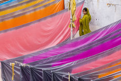 Indian sarees airing in the sun. In varanasi, a girl working for the dyehouse is sunning their new sarees stock images