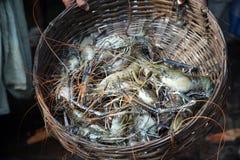 Indian sea crab. In basket Royalty Free Stock Image