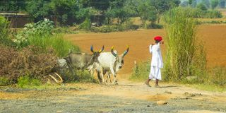 Indian shepherd on the way from Jaipur to Delhi, India stock photography