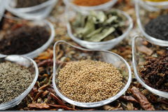 Indian Spice 05 Stock Image