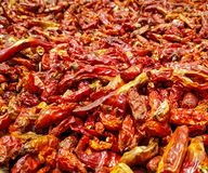 Indian spice red chillies royalty free stock image