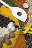 Indian spices. Spices and herbs used in indian kitchen Stock Photography