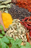 Indian Spices. And herbs for cooking curries Stock Image