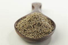 Indian spices-Cumin. Royalty Free Stock Images
