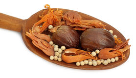 Indian spices on a wooden spoon Stock Photography