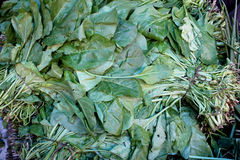 Indian Spinach, palak. Palangi, beet leaf, Beta vulgaris subsp maritima syn Beta bengalensis , grown as leaf vegetable in plains of India, consumed as spinach royalty free stock photo