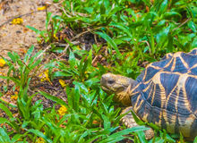 The Indian star tortoise Stock Images