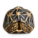 Indian Starred Tortoise - Geochelone elegans Stock Image