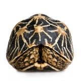 Indian Starred Tortoise - Geochelone elegans stock image