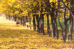 Indian summer Royalty Free Stock Images