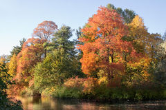 Indian summer 2 Stock Photography