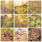 Indian summer Royalty Free Stock Photo