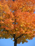 Indian Summer Stock Image